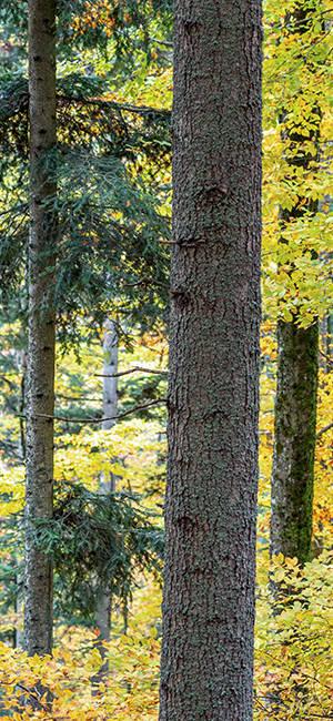 img-AQ-CS-Bracknell-Forest