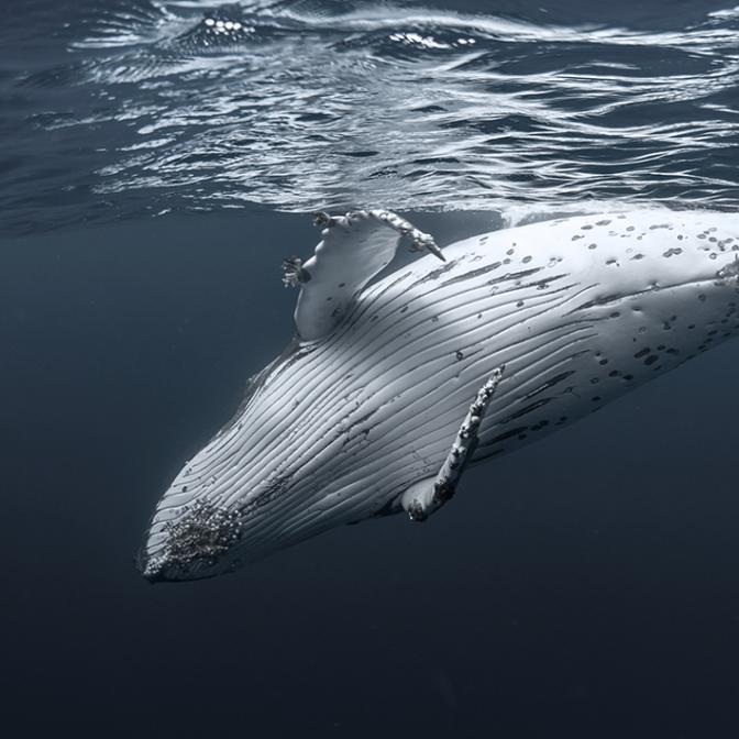 img-cetacean-conserva...