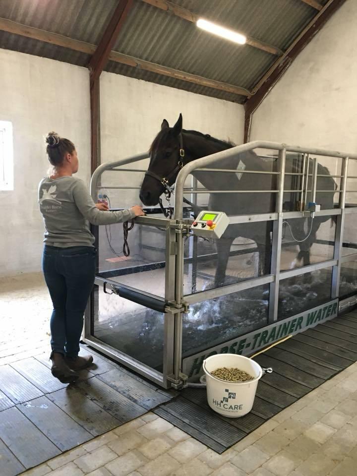 foto_healthy_horse.jpeg