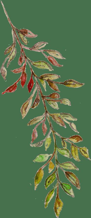 Leaf 11