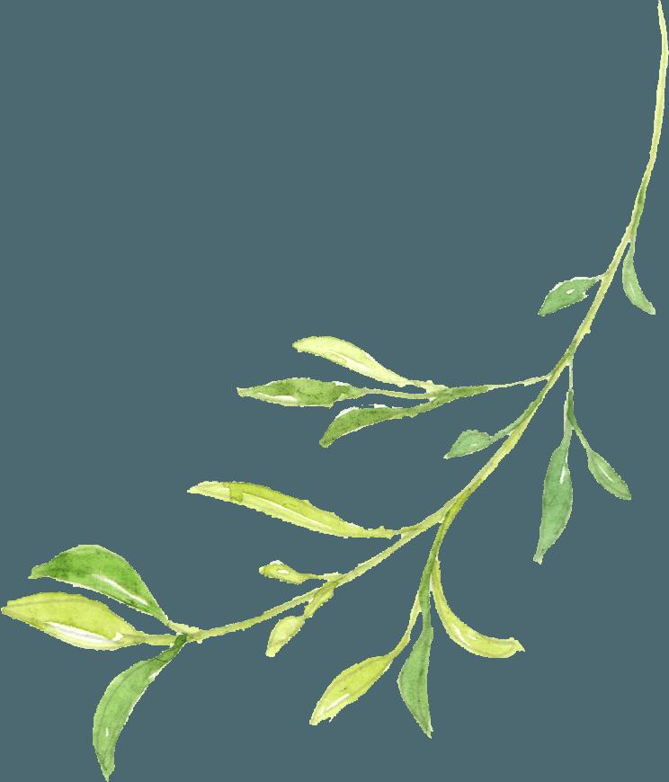 Leaf 4