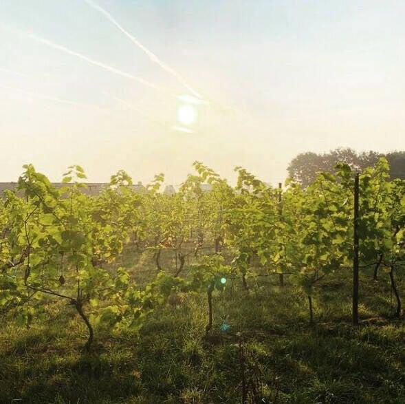 wijngaard-4.jpeg