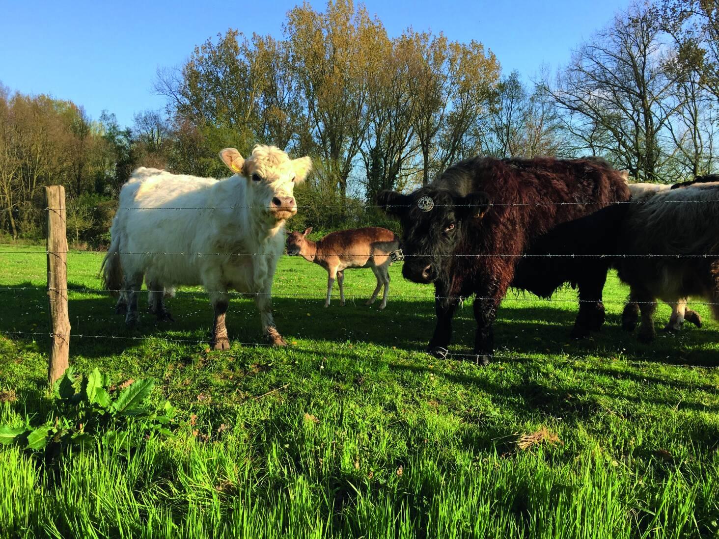 koeien-_3.jpg
