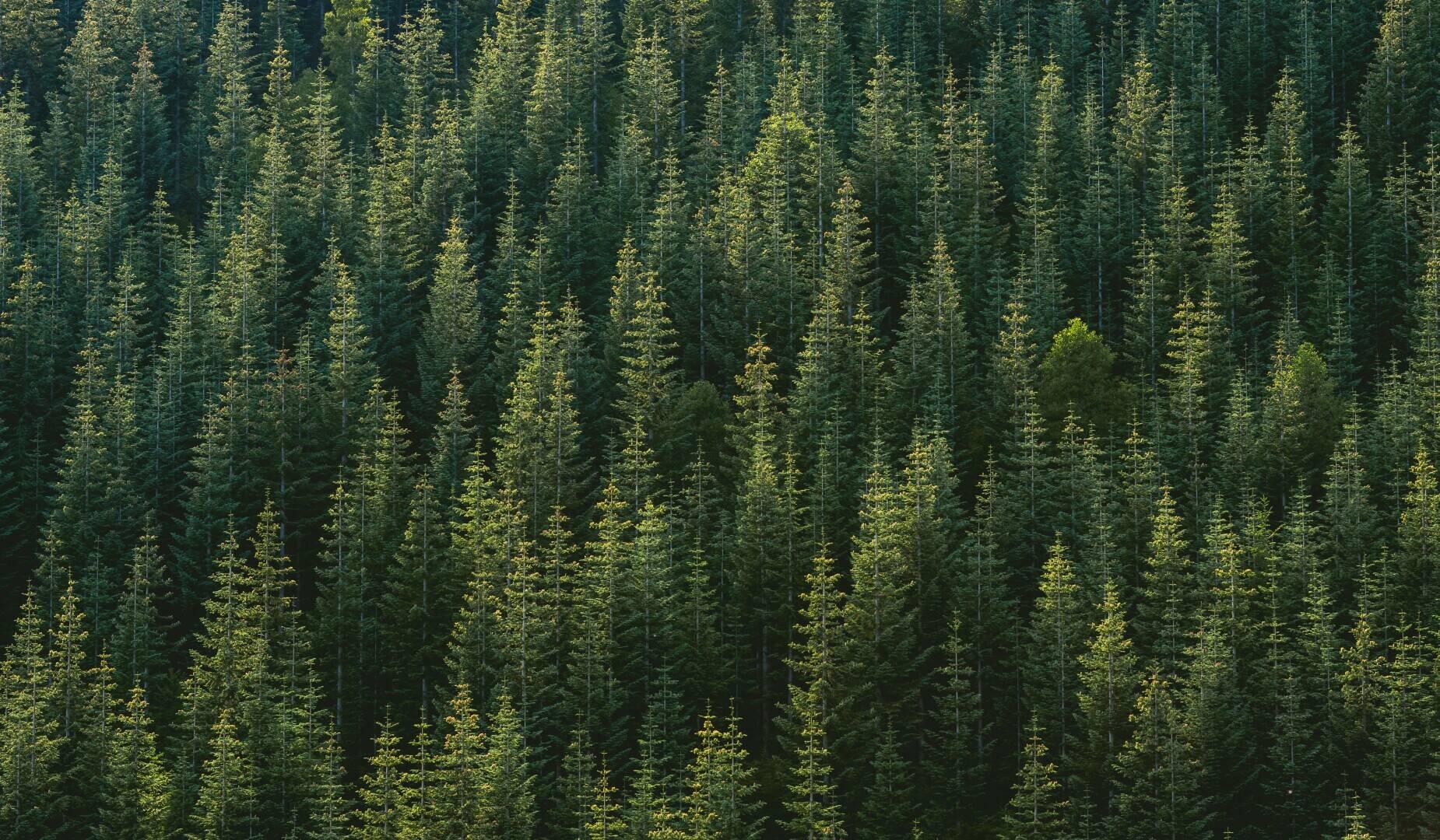 tree-nature-backgroundjason-leem.jpg