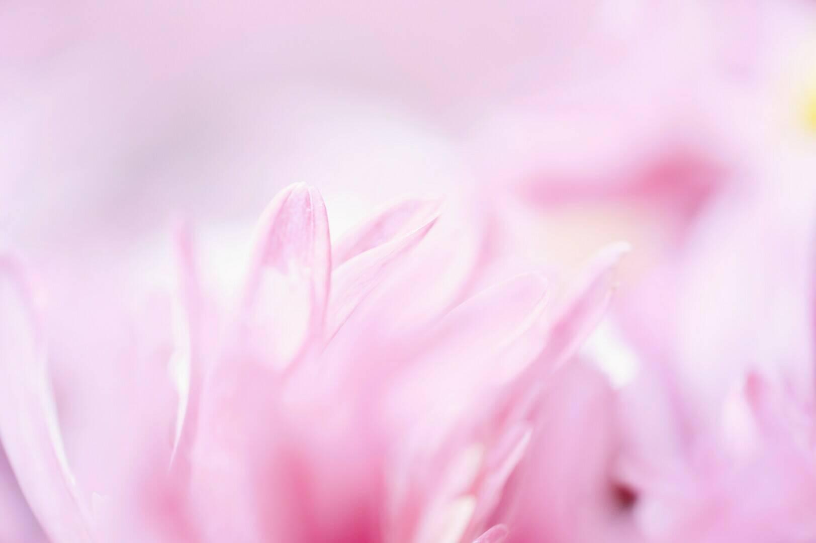 plant-flower-petalxx-liu.jpg