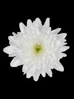 flower image (Copy)