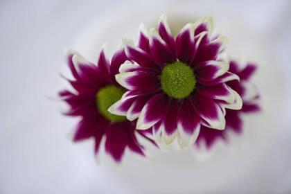 hay purplebase