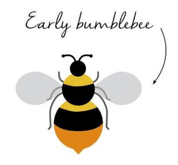 early bee