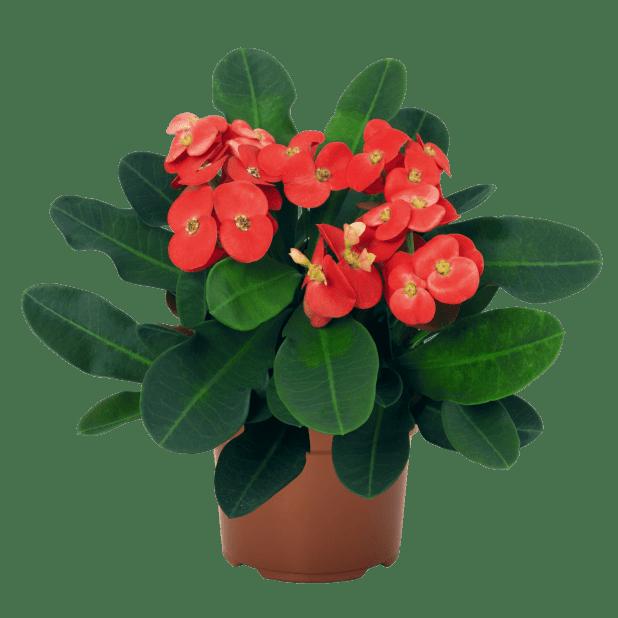 plant los