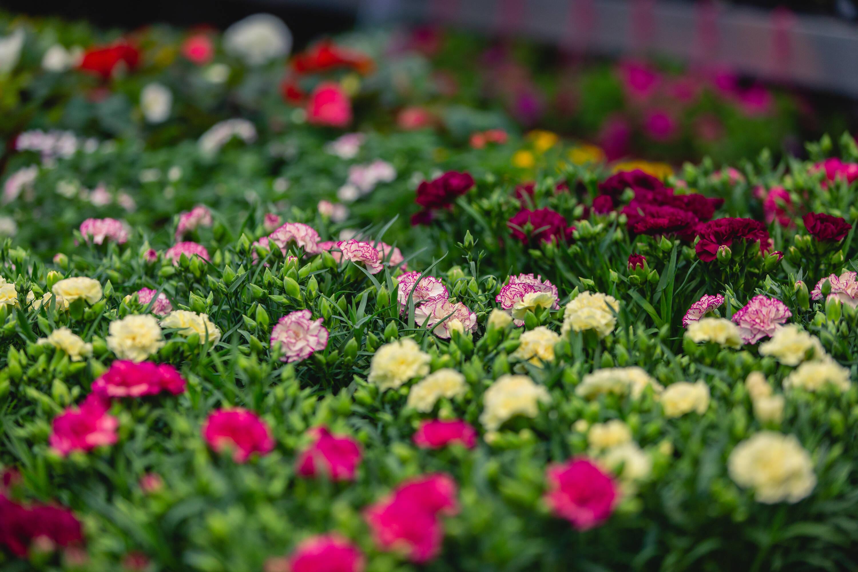 bloemenbureau-arrange...