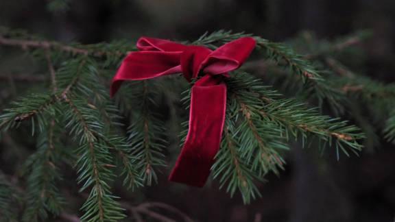 metsahallitus_joulukuusi.jpg