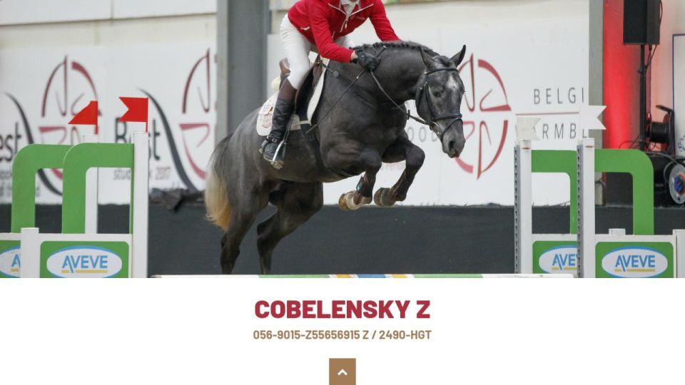 COBELENSKY Z - Equitime-hengstenkeuring